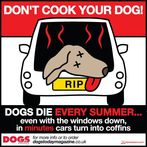 dont-cook-your-dog