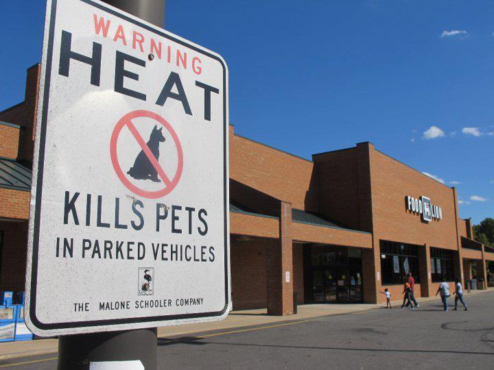 heat-kills-dogs